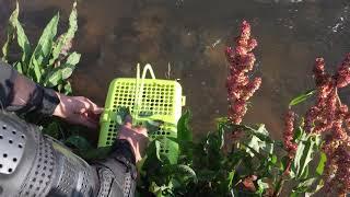 Казахстан. Кино про рыбалку в горной речке.