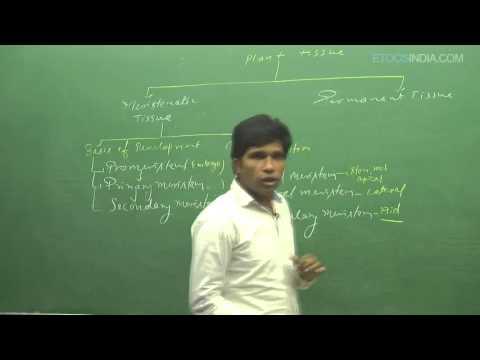Anatomy of Flowering Plants by M. Asad Qureshi (MAQ) Sir (ETOOSINDIA.COM) thumbnail