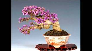 Chiếc Lá Thu Phai -Nguyễn Ðức Ðạt Violin & Guitar [Bonsai Flowers] -HyVan