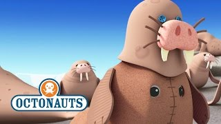 Octonauts: Lets Pretend To Be A Walrus