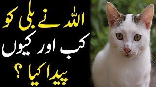 Allah Ne Bili Ko Kab Aur Kyun Paida Kya | History Of Cat | Islam Advisor