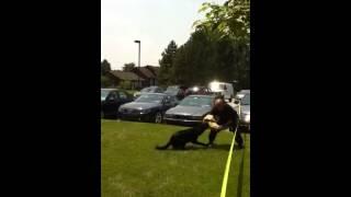 Nj Police K9 Show - Gloucester County