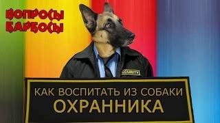 Как воспитать из собаки охранника.(Сегодня поговорим о охранных качествах собак, как их начинать развивать и все ли собаки могут охранять...., 2016-01-26T15:19:59.000Z)
