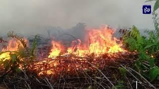 حرائق تلتهم غابات في جزيرة سومطرة - (4-8-2019)