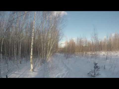 Щобор подранка лося по снегу
