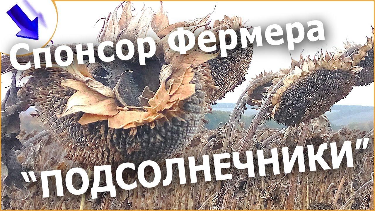 Страна производитель: украина. Описание: продаем семена сафлора, в наличии 22 тонны. Цена на условиях поставки fca ивано-фра подробнее.