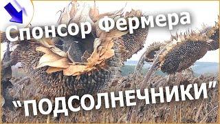 Затраты и доход с 1 га. ПОДСОЛНУХА! Выгодно сеять Подсолнечник!? #фермерство