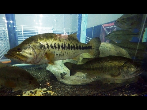 How to catch catfish with worms - fishing for catfish in a lake from YouTube · Duration:  14 minutes 9 seconds