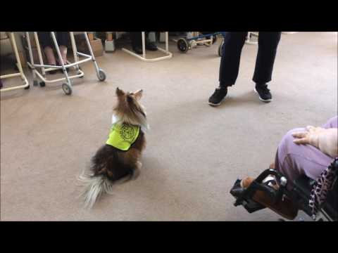 Pets as Therapy dog does tricks