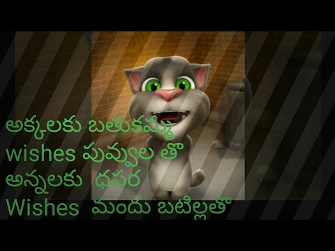 Funny tom cat funniest comedy video 2017//just for fun tom cat//saddula batukkamma mariyu dussera