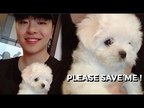 JUNHOE ANNOYING HIS NEW DOG