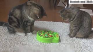 кошачьи приколы 4