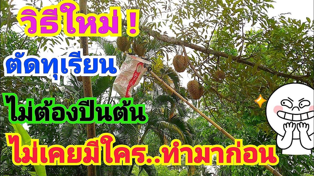 """""""นวัตกรรมใหม่ล่าสุด""""ตัดทุเรียนโดยไม่ต้องปีนต้นอีกต่อไป👍👍 How to cut durian without climbing the tree"""