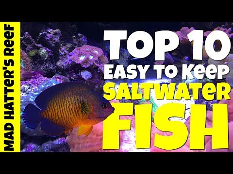 Top 10 Easy To Keep Saltwater Fish