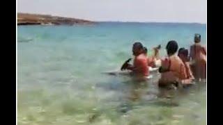 Delfino spiaggiato Manduria