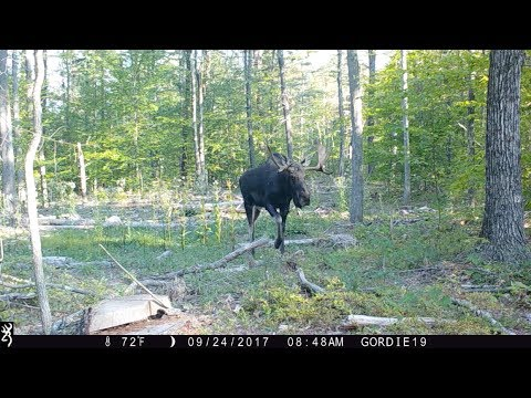 New Hampshire trail cam videos