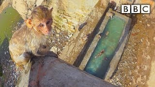 Baby monkey learns to swim and tries a high dive - Spy in the Wild: Episode 4 Preview - BBC One