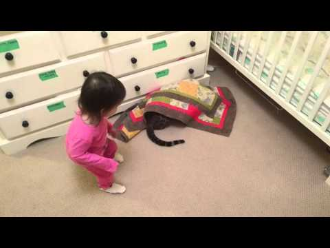 Hide and Seek with Bengal Cat and Baby