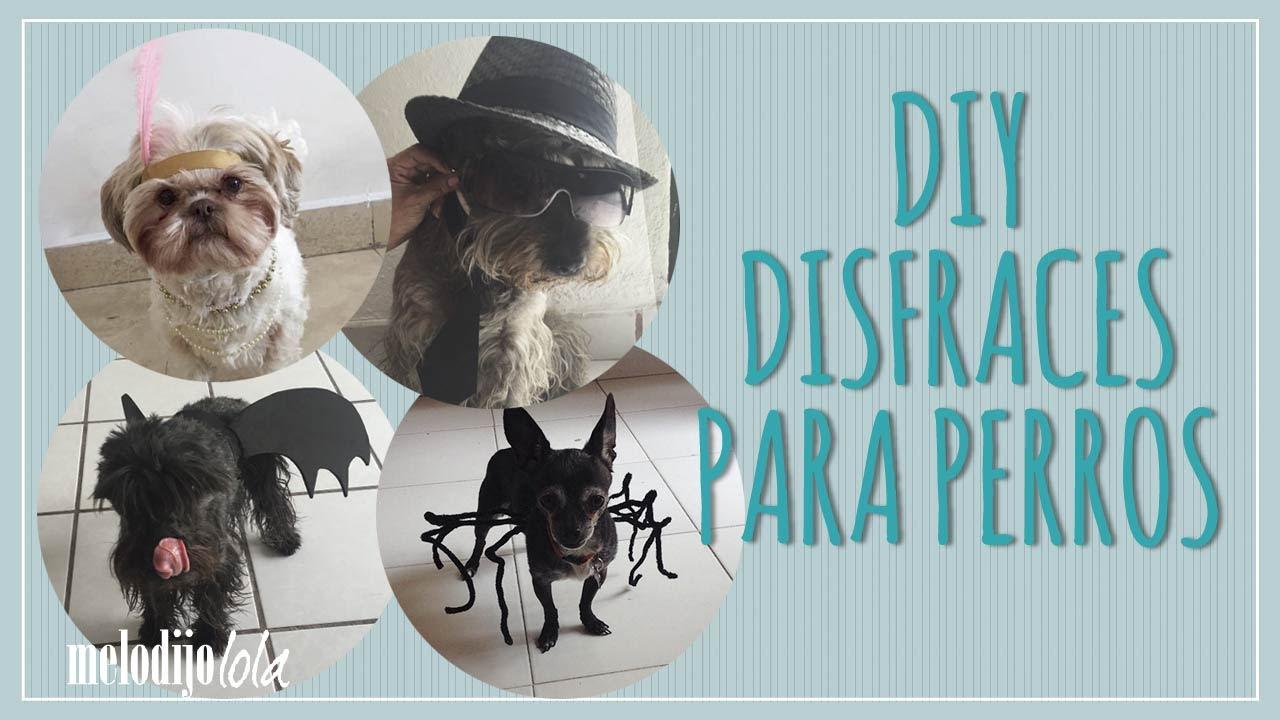 Disfraz Para Perro Diy Disfraces Para Perros 4 Ideas