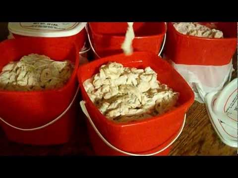 The correct way to clean Chitterlings!