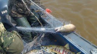 ПРОМЫСЛОВАЯ РЫБАЛКА СЕТЯМИ Рыбалка на Амуре Лов лосося кеты