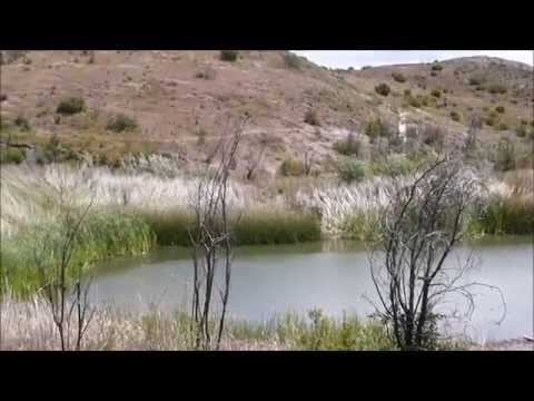 Twin Ponds Conservation Area In Dos Vientos Section Of Newbury Park