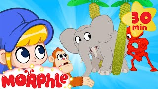 Morphle's Zoo Animals! - Tigers, Monkeys and Elephants | Cartoons for Kids | Morphle TV
