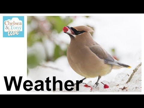 WEATHER Photography Reviews (T&C LIVE)