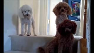 Смешные собаки когда нашкодили. Видео подборка