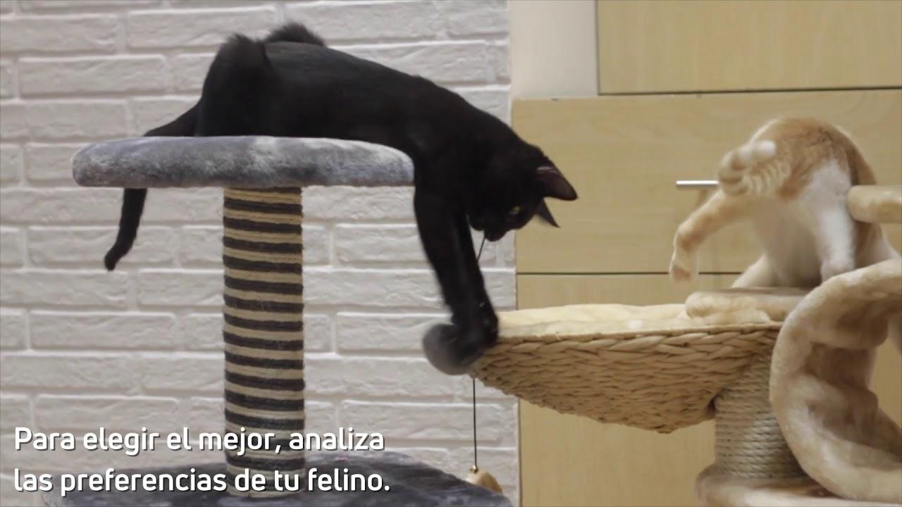 El mejor rascador para tu gato