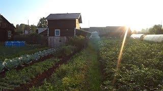 Утро пятницы // Жизнь в деревне