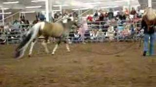 Summer Breeze Guinness Book of World Records Horse