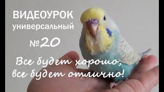 """🎶 Учим попугая говорить. Урок №20: """"Все будет хорошо, все будет отлично!"""""""