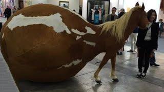 اغرب 15 فصائل خيول