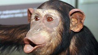 🐵 Смешные #обезьяны. Смешное видео про обезьян! #Индия, Дудхсагар