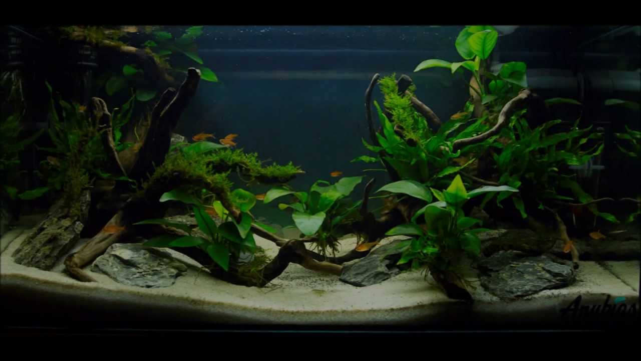 Easy Aquascaping - YouTube