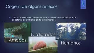 Origem dos Reflexos - Cap 01 Neuroanatomia Funcional