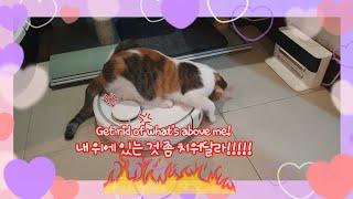 별☆이가 사랑하는 로봇청소기♥(ft. 로봇청소기 파업 …