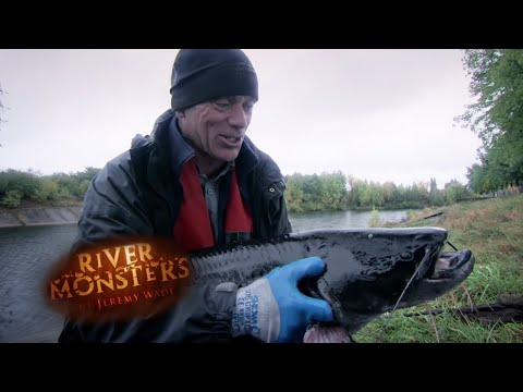 Radioactive MUTANT In Chernobyl | SOM | River Monsters