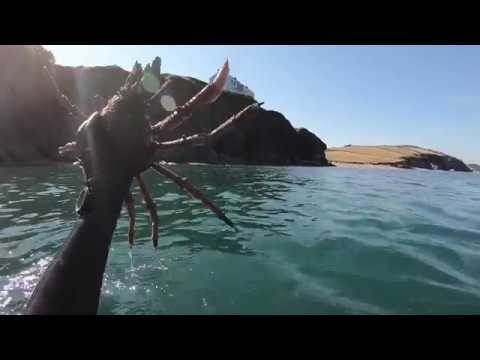 Spearfishing Spider Crabs