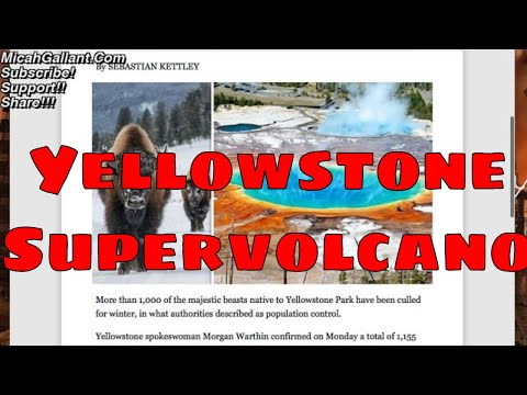 Yellowstone volcano ERUPTION warning: Hundreds of bison dead