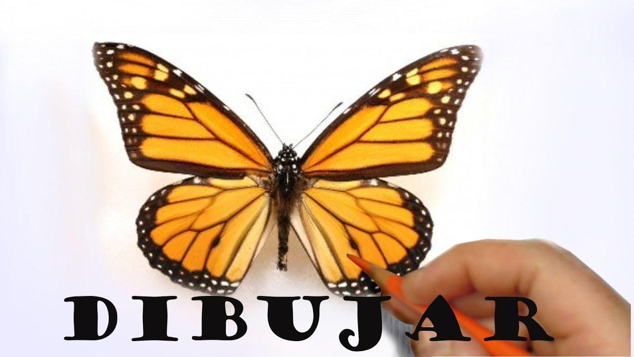 Como Dibujar Una Mariposa Monarca Youtube