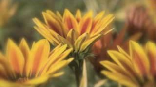 Flies On The Butter - Wynonna Judd (With Naomi Judd)