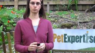 SprayShield Dog Deterrent Spray Demo by Pet Expertise
