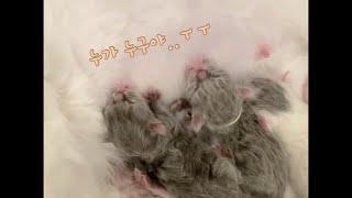 아기고양이들에게 실목걸이를 해줄 수 밖에 없던 이유 #…