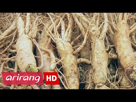 Peace Insight _ The Roots that Embody the Spirit of Korea, Ginseng