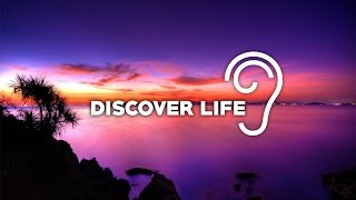 Repeat youtube video Uppermost - Discover Life