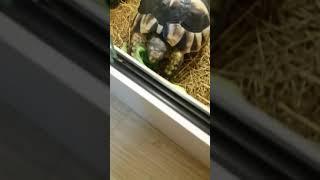 거북이 먹방