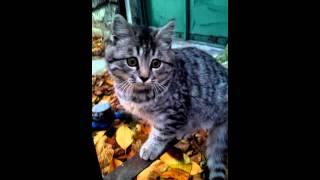 Кот гуляет по двору:-)