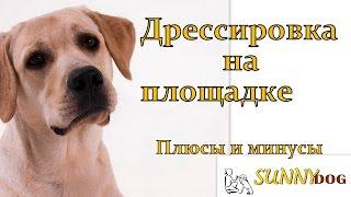 Дрессировка на площадке  Виды дрессировок(Бесплатный курс по дрессировки = http://sunny.dog/free/- ПОЛНЫЙ пошаговые бесплатный курс по дрессировке -
